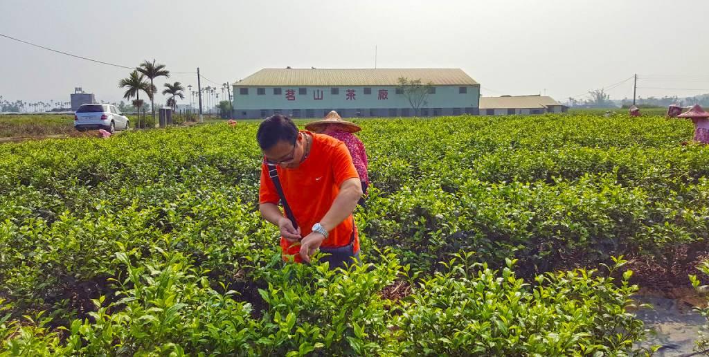茗山國際茶業有限公司